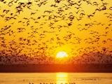 Venha ver o por do sol e conhecer as Ideias doCanário